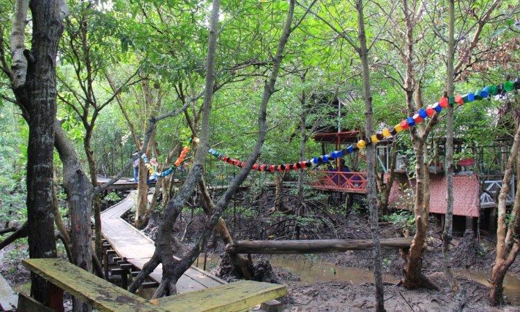 Hutan Mangrove Dumai