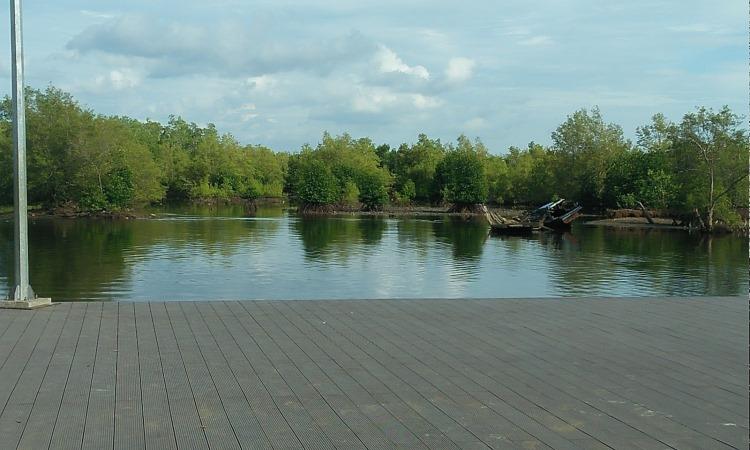 Hutan Mangrove Pulau Baai