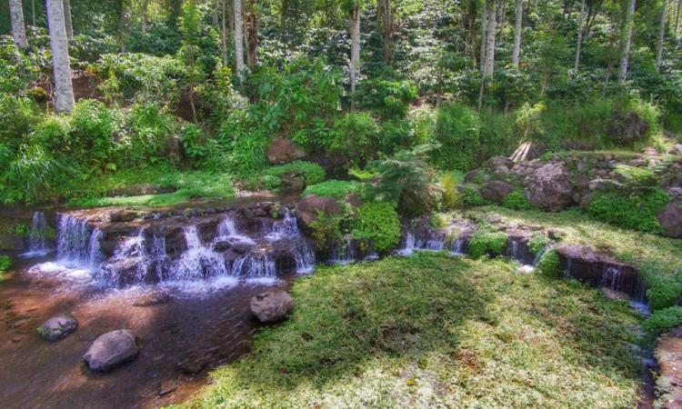 Green Paradise Pagar Alam