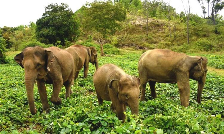 Barumun Sanctuary Wild Life