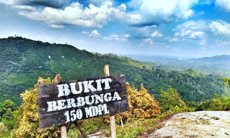 Bukit Berbunga