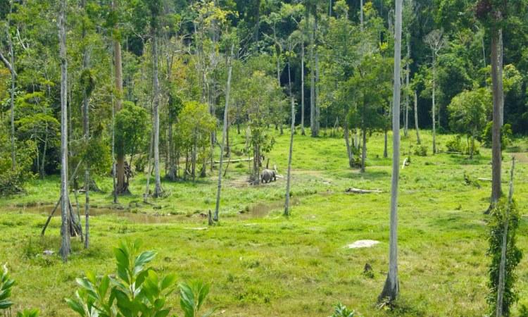Hutan Lindung Bukit Batu