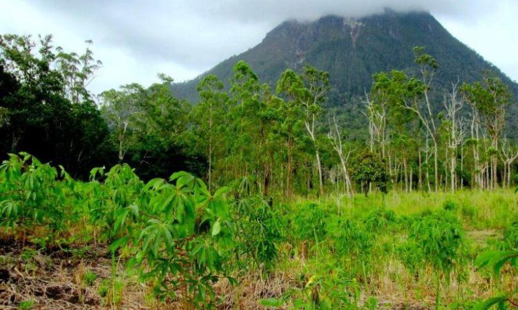 Hutan Lindung Sosopan