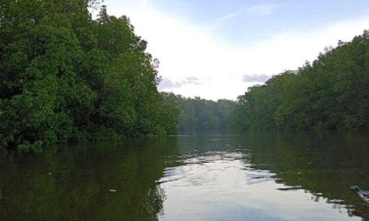 Hutan Mangrove Lalan