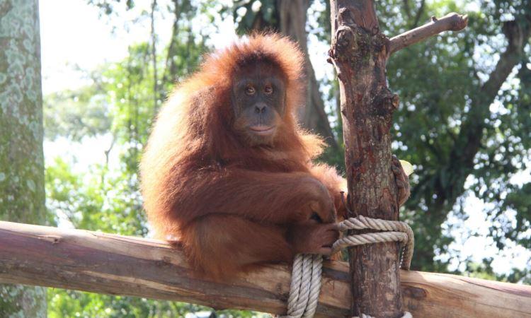 Kebun Binatang Pematangsiantar