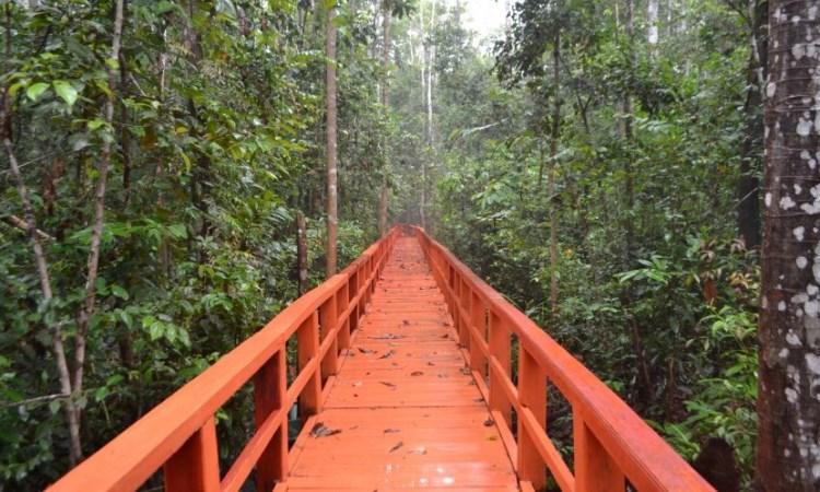 Hutan Pelawan