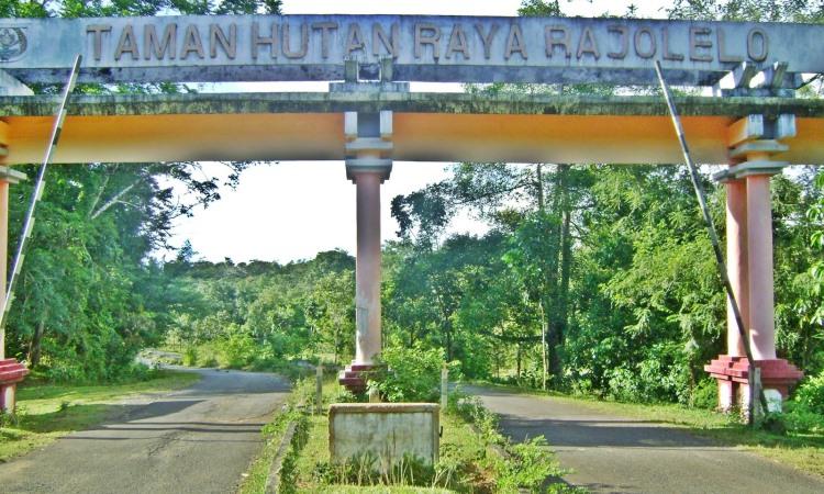 Hutan Raya Rajo Lelo