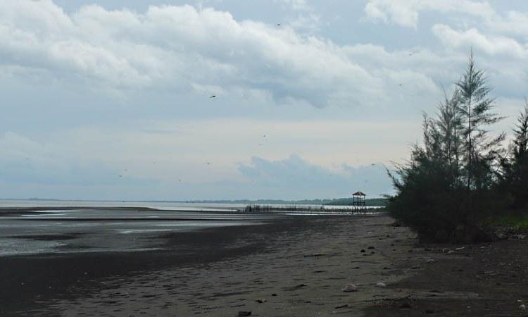 Pantai Cemara
