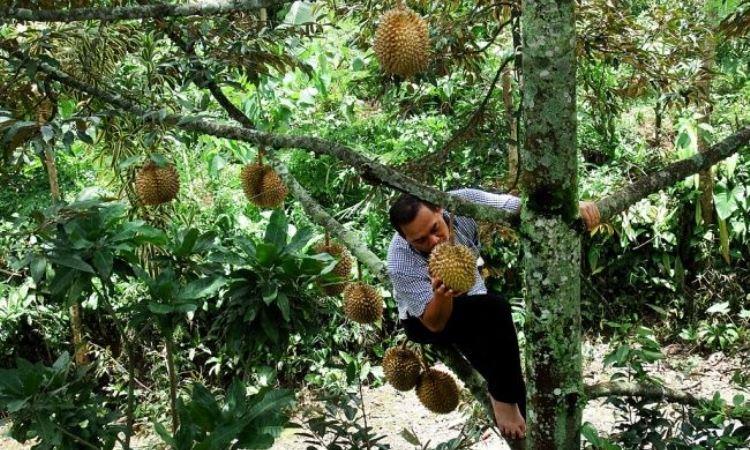 Pondok Durian Mestong