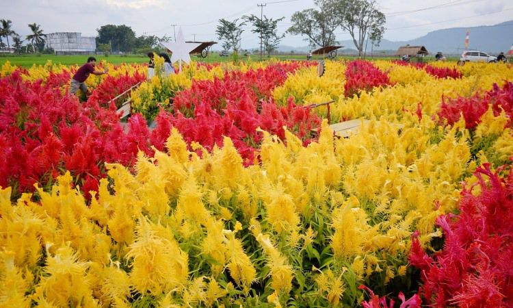 Taman Bunga Rejang Lebong
