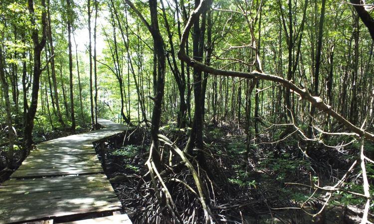 Wisata Cagar Alam Hutan Bakau Pantai Timur