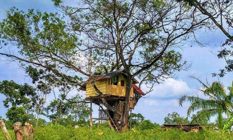Rumah Pohon Jomblo