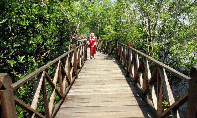 Taman Mangrove Langsa
