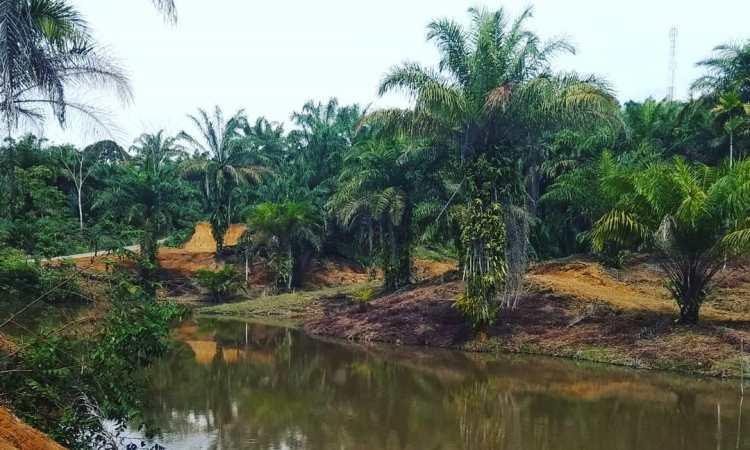 Kampong Namo Buaya