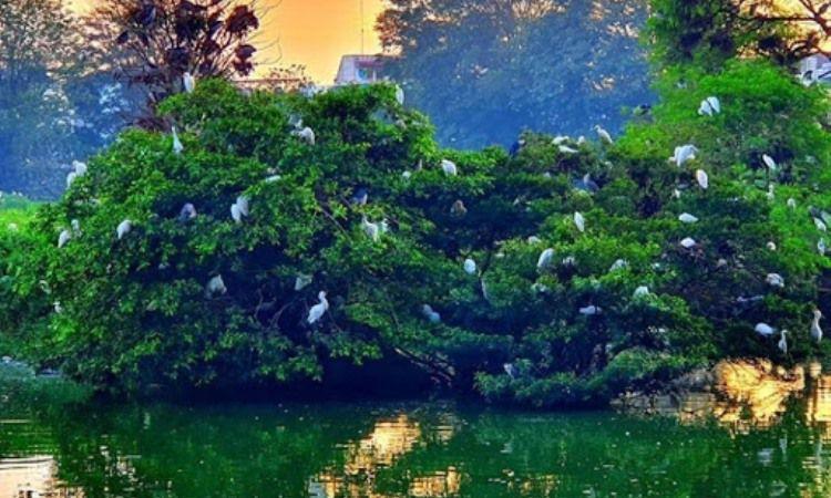 Taman Burung Cemara Asri