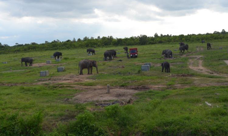 Daya Tarik Taman Nasional Way Kambas Lampung