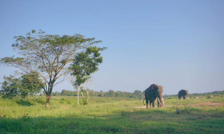 Daya Tarik Taman Nasional Way Kambas