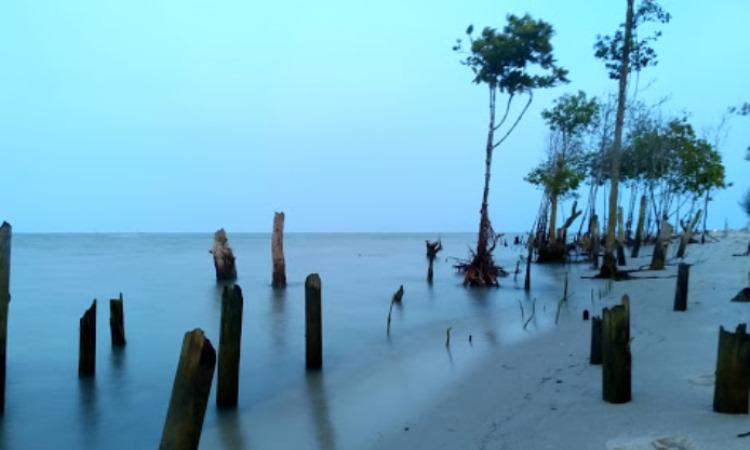 Daya Tarik yang Dimiliki Pantai Mangrove Kampung Nipah