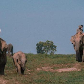 Taman Nasional Way Kambas, Tempat Konservasi Gajah Sumatera