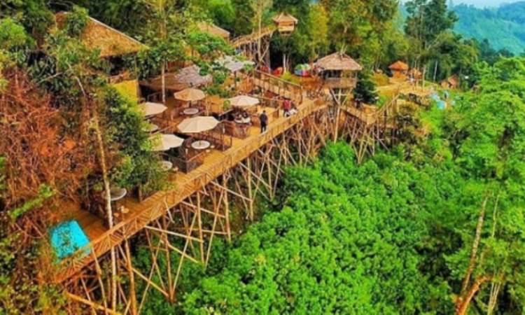 Alamat Rumah Pohon Habitat
