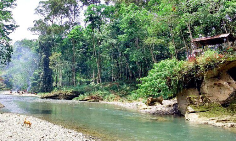 Pesona Landak River di Langkat, Wisata Alam di Tengah Hutan Tropis