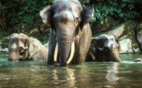 Tangkahan Langkat, Keindahan Wisata Alam di Hutan Sumatera Utara yang Memikat Hati
