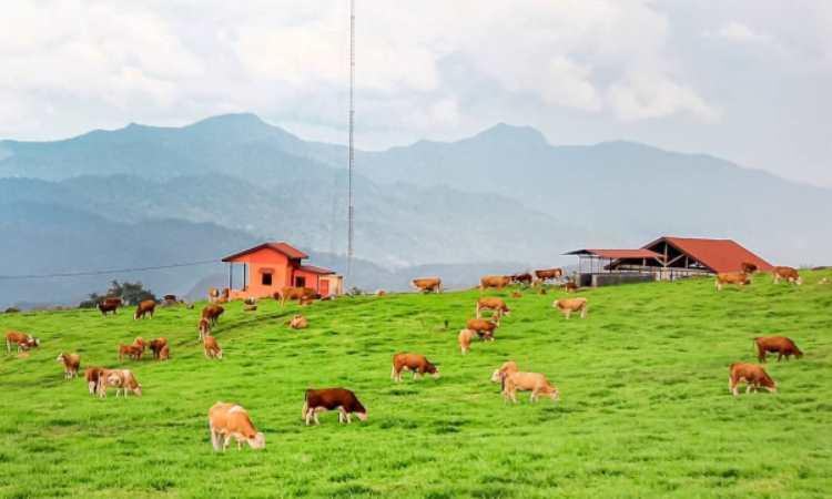 Fasilitas di Padang Mangateh