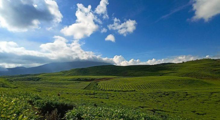 Kebun Teh Kayu Aro, Panorama Alam Eksotis di Kaki Gunung Kerinci