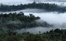 Taman Nasional Bukit Barisan Selatan, Wisata Alam yang Kaya Pesona di Lampung